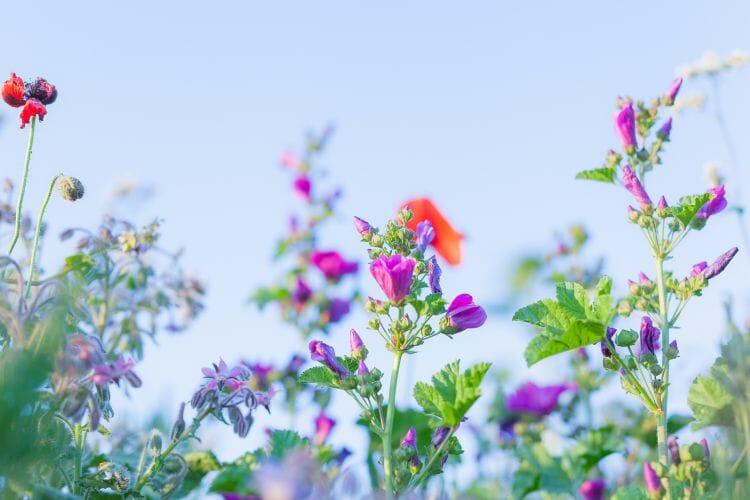 Wilde Zomer Bloemen gemaakt door Dennis Khalil professioneel fotograaf uit Den Bosch ('s-Hertogenbosch) en omgeving