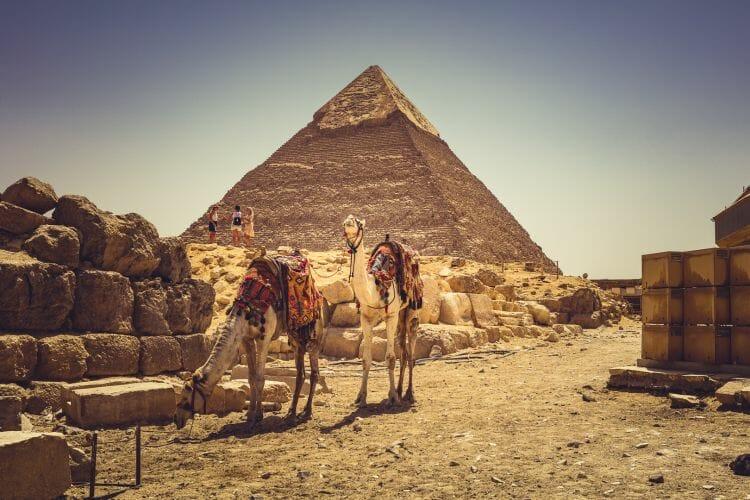 De Piramides in Gizeh met kameel